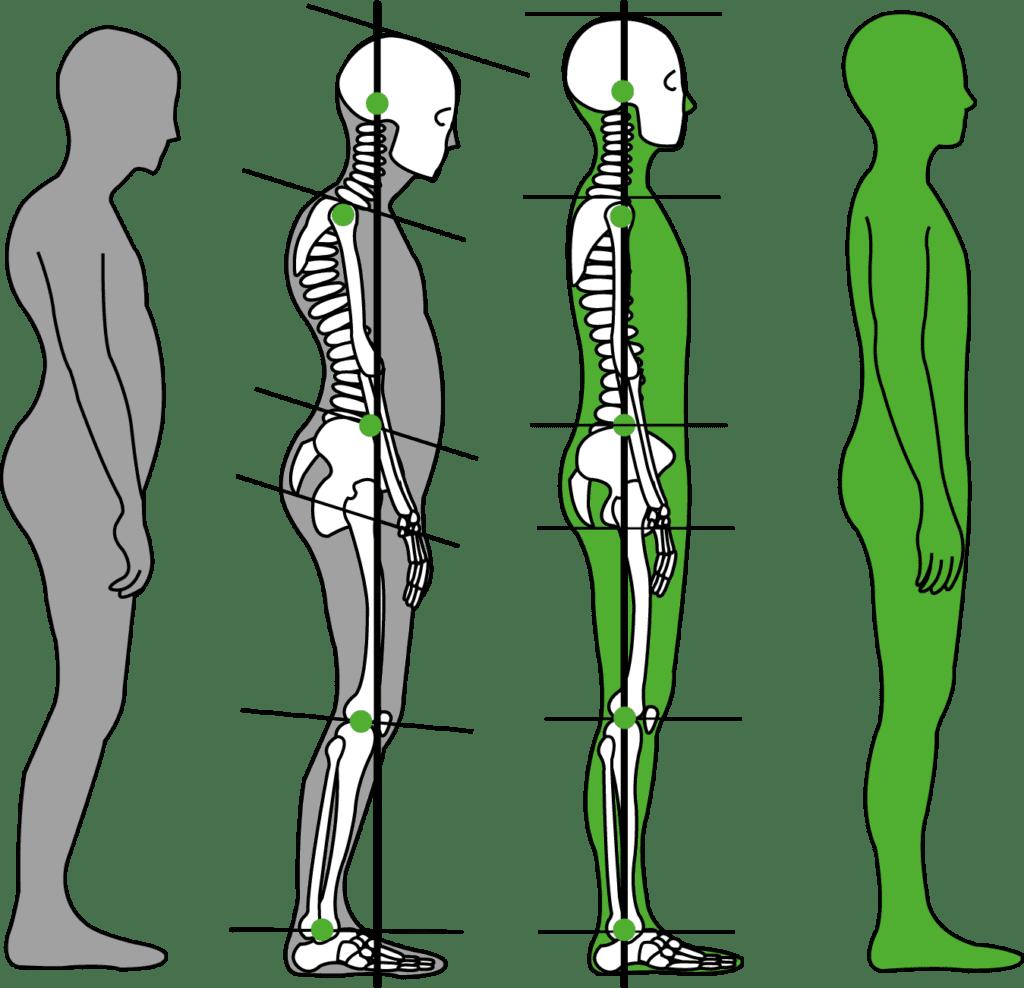 Fle-xx dient nicht nur zur Haltungsverbesserung sondern steigert auch die Beweglichkeit